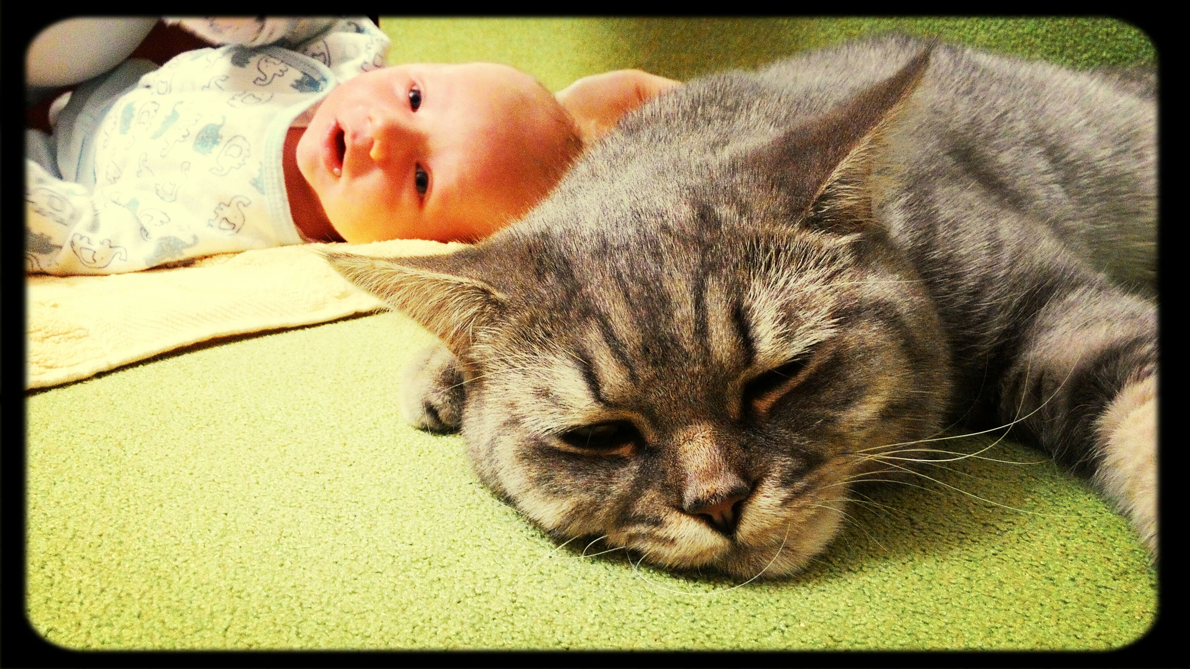 transfer print, animal themes, one animal, mammal, auto post production filter, domestic animals, pets, relaxation, lying down, sleeping, resting, eyes closed, indoors, close-up, domestic cat, portrait, cute, feline, looking at camera, one person