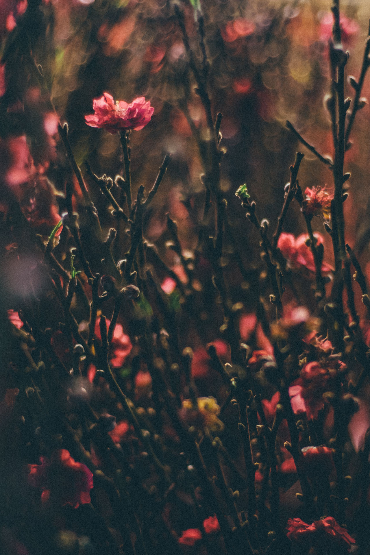Beauty In Nature Close-up Day Flower Freshness Growth Leaf Nature No People Outdoors Plant Tree Water