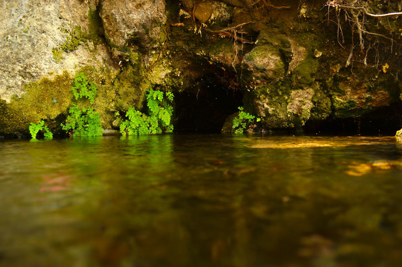 Cave Cavern Cueva Mineral Water Plants Rio River Rock And Water Root Vegetable Water Puebla Nature