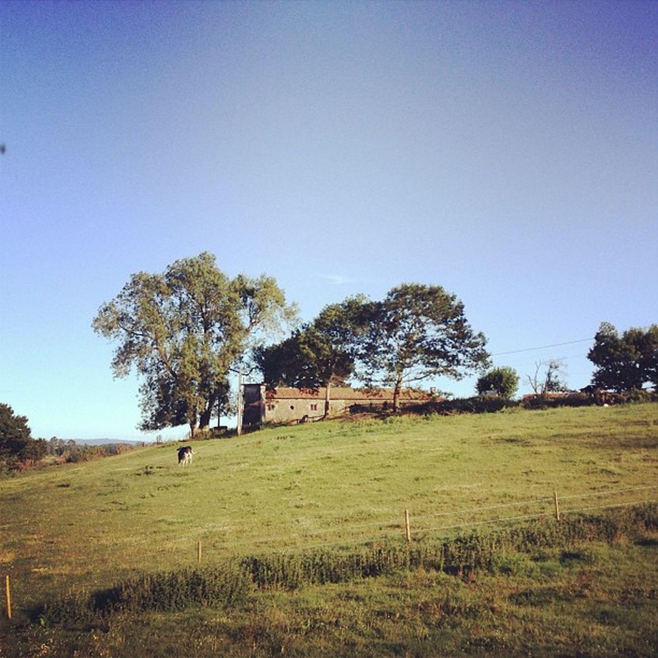 Xanceda Granja Granxa Landscape paisaxe