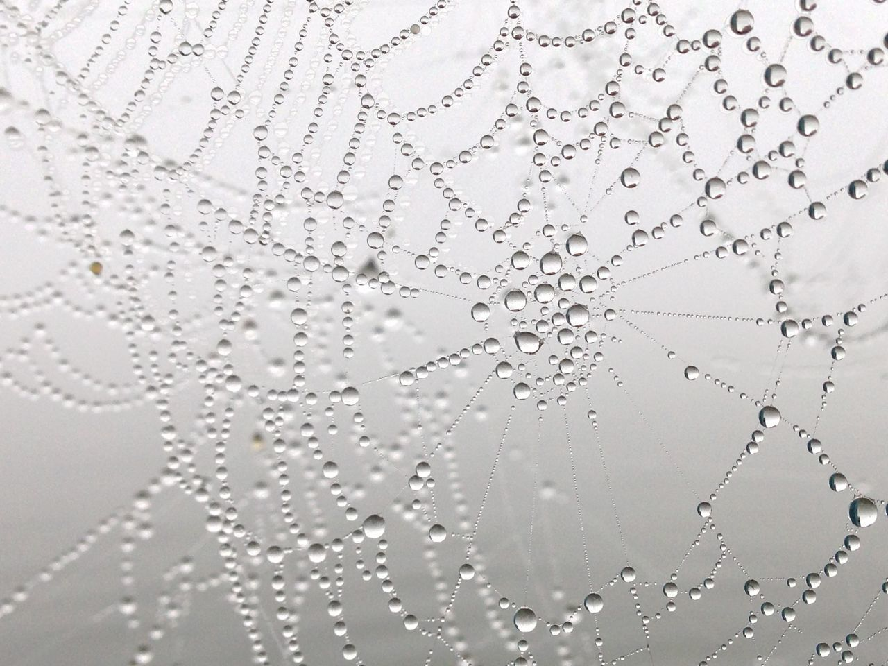 Backgrounds Black & White Blackandwhite Close-up Drops Of Water Fiber Spider Spider Spiderweb Water Water Drop