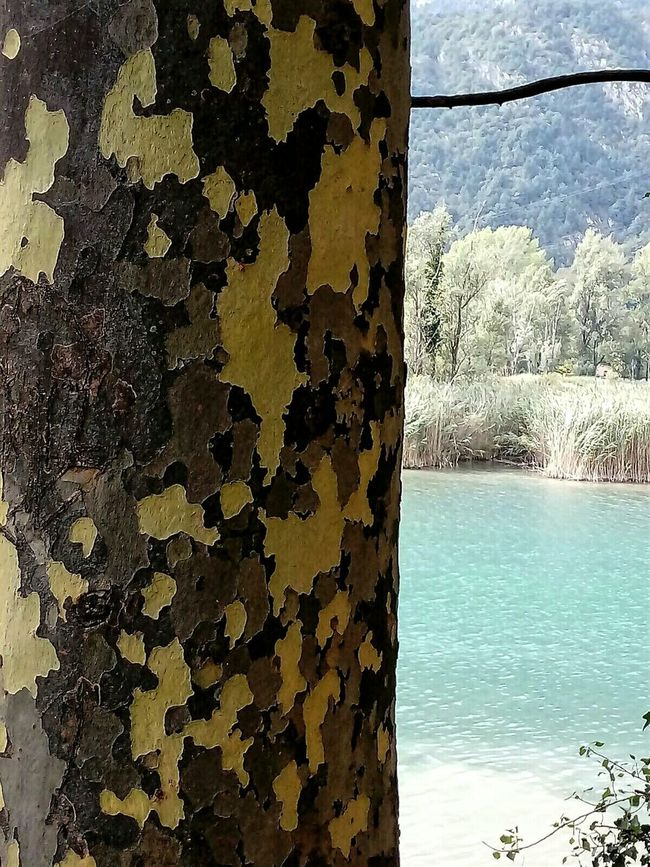 Tree Trunk Mimetic Mimetism Tree Art Tree_captures Emerald Lake At The Lake Texture Textures And Surfaces Maximum Closeness