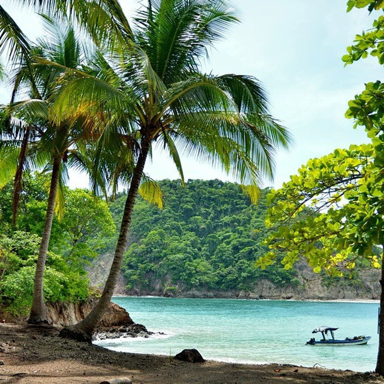 tree, palm tree, nature, water, scenics, beauty in nature, beach, sea, tropical climate, tranquil scene, nautical vessel, tranquility, travel destinations, day, outdoors, vacations, green color, sand, forest, no people, sky, tree trunk, mountain, longtail boat
