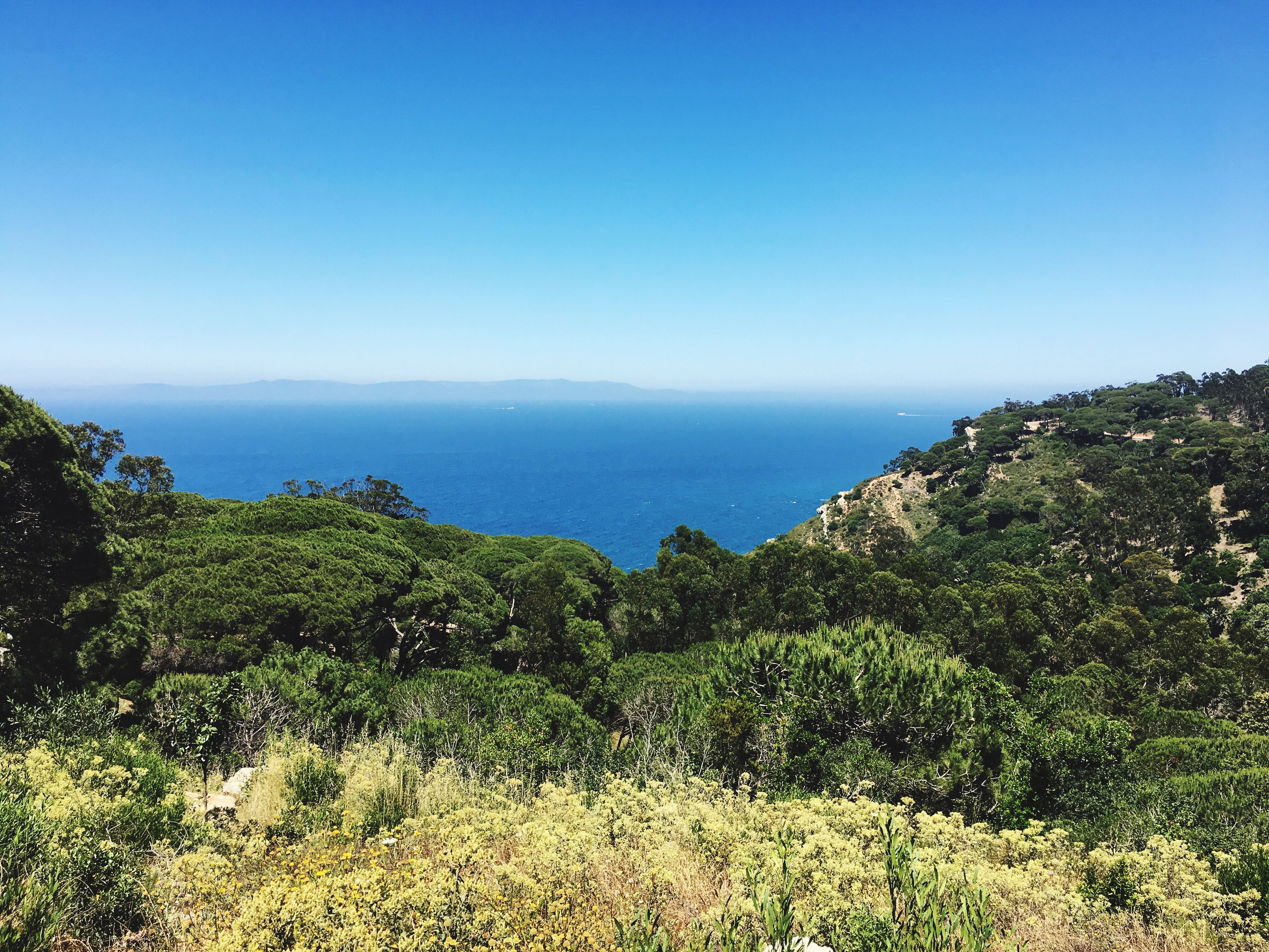sea, clear sky, tranquil scene, blue, horizon over water, scenics, beauty in nature, tranquility, water, copy space, nature, tree, growth, plant, idyllic, green color, sky, day, landscape, outdoors