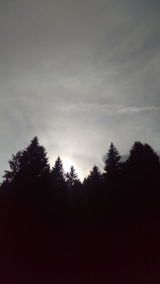 Beauty In Nature Cloud - Sky Dark Day Growth High Section Low Angle View Nature No People Non-urban Scene Outdoors Outline Scenics Silhouette Sky Tranquil Scene Tranquility Tree Treetop