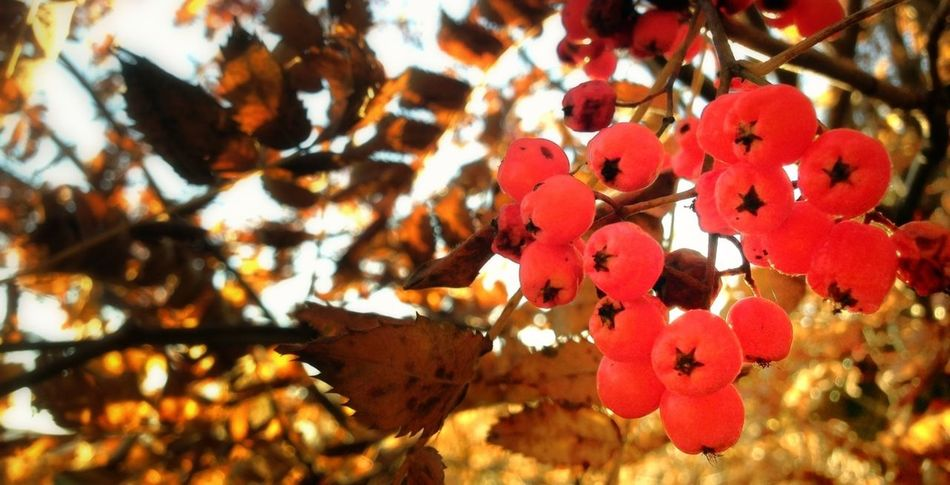 -Gooooodmorning! :D theese look like candy hihi so cute! TreePorn Nature_collection Eye4nature Colors