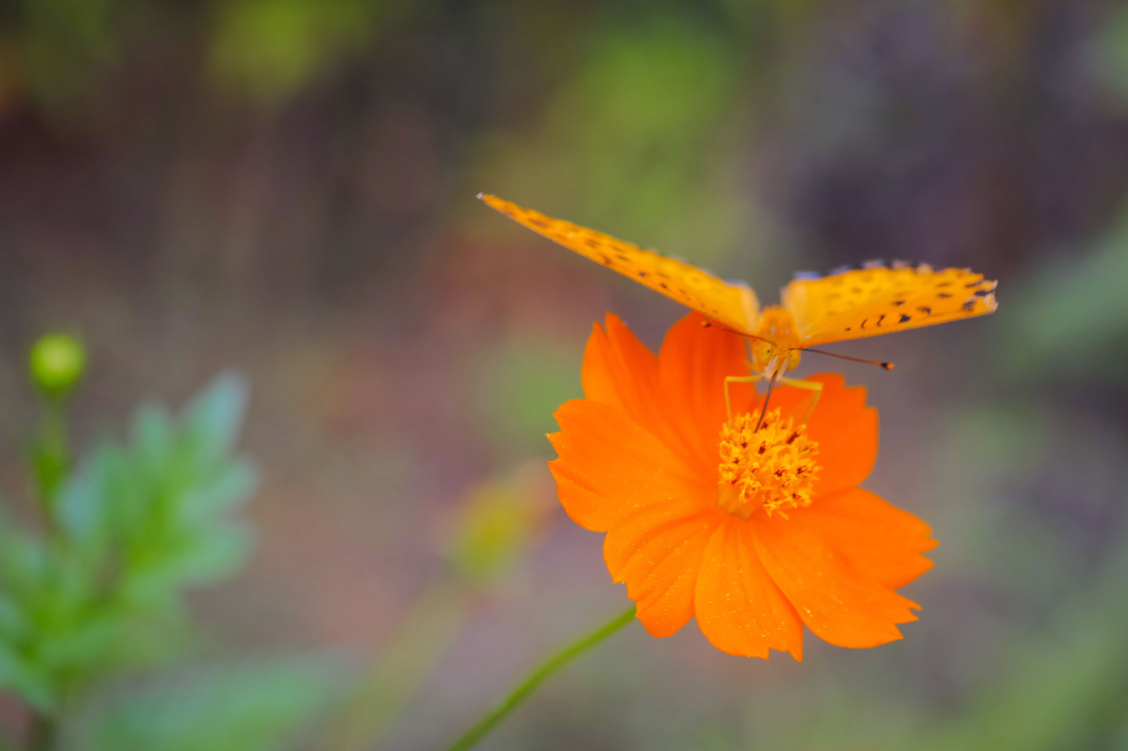 flower, petal, freshness, fragility, flower head, focus on foreground, growth, beauty in nature, close-up, yellow, blooming, nature, plant, pollen, in bloom, single flower, selective focus, stamen, orange color, blossom