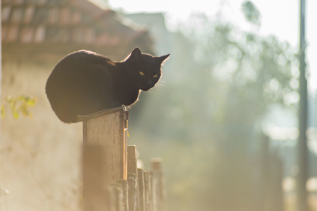 domestic cat, feline, one animal, mammal, domestic animals, no people, outdoors, animal themes, nature, day