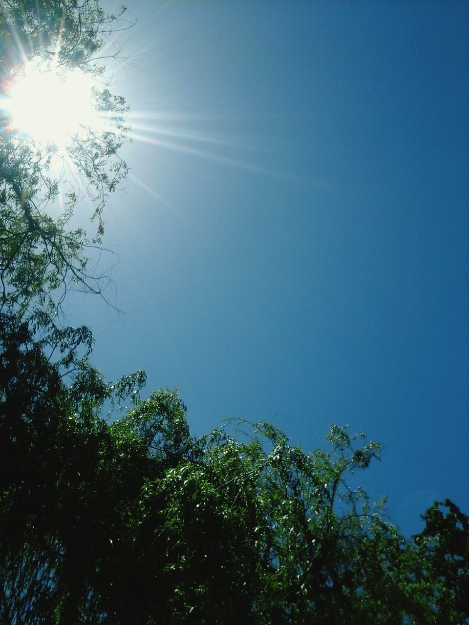 nature, sun, low angle view, tree, sunlight, beauty in nature, day, no people, sunshine, outdoors, sky