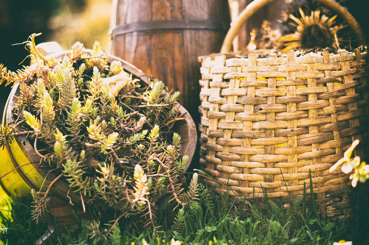 Garden Gardening Garden Photography Gardens Wooden Basket Growing Plants Grow