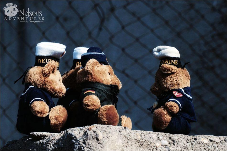 Nelson meets Major Tom (Airforce) and two other seabears. NelsonsAdventures Teddy EyeEm Best Shots EyeEm Best Edits