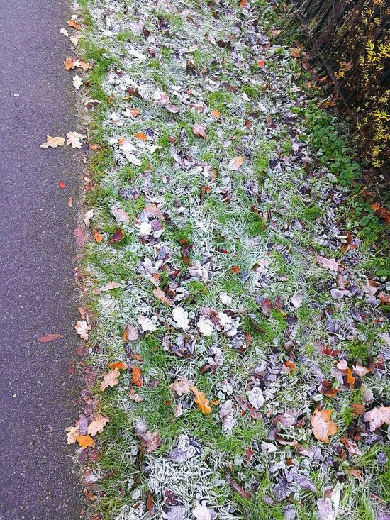Cold Days Morning Grass Leaves Frozen Dewdrops Road Outdoors No People