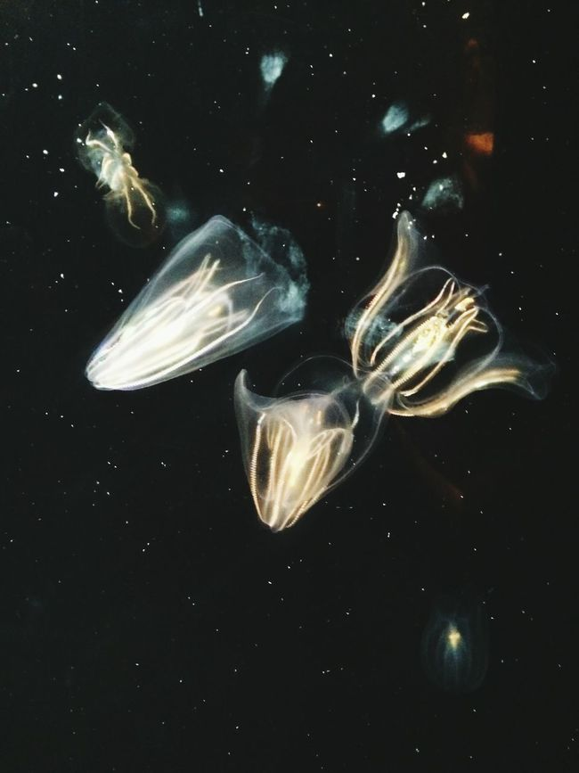 Hello World Enjoying Life Pivotal Ideas Backgrounds Color Palette Shootermag Underwater Aquarium Sea Life Beauty In Nature Colour Of Life Exceptional Photographs EyeEm Nature Lover From My Point Of View Jellyfish Glowing Underwater World Underwater Photography Underwater Life
