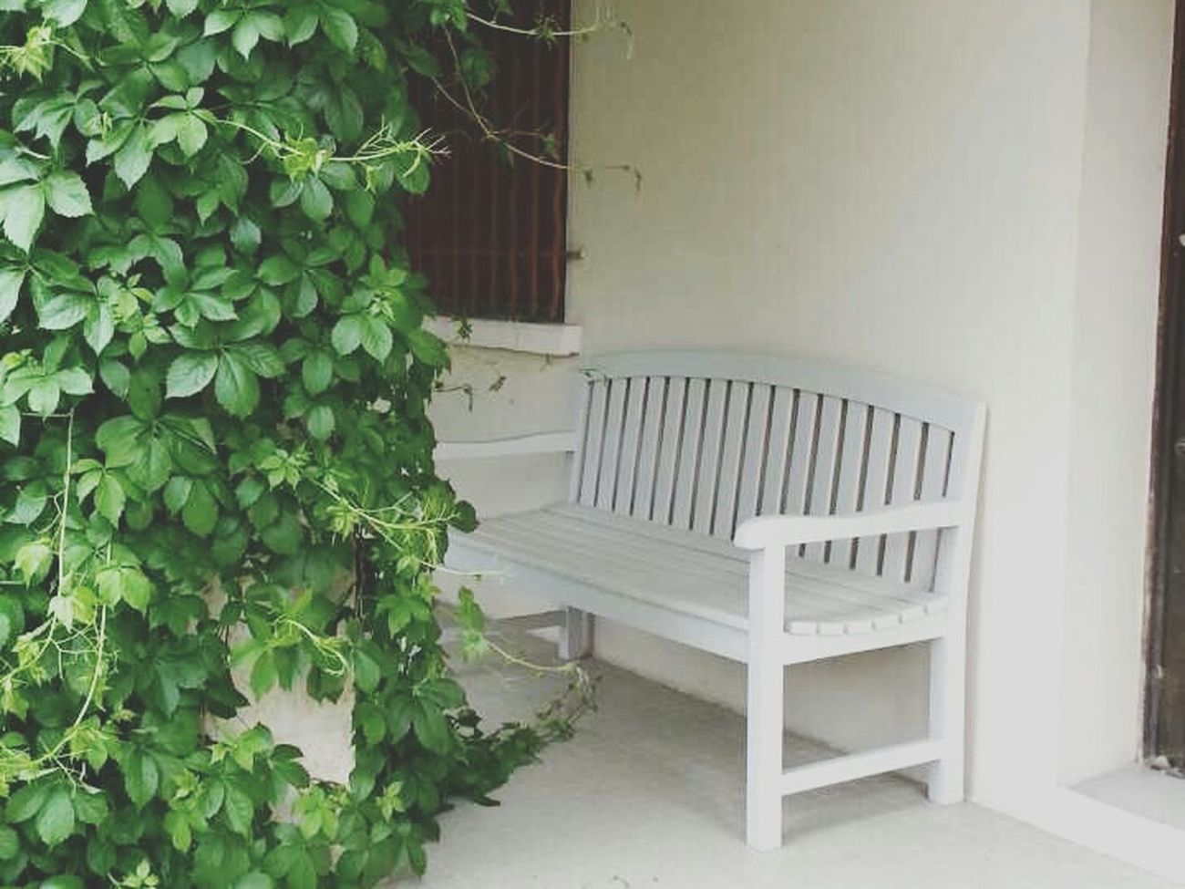 Banc Home Nature Photographie
