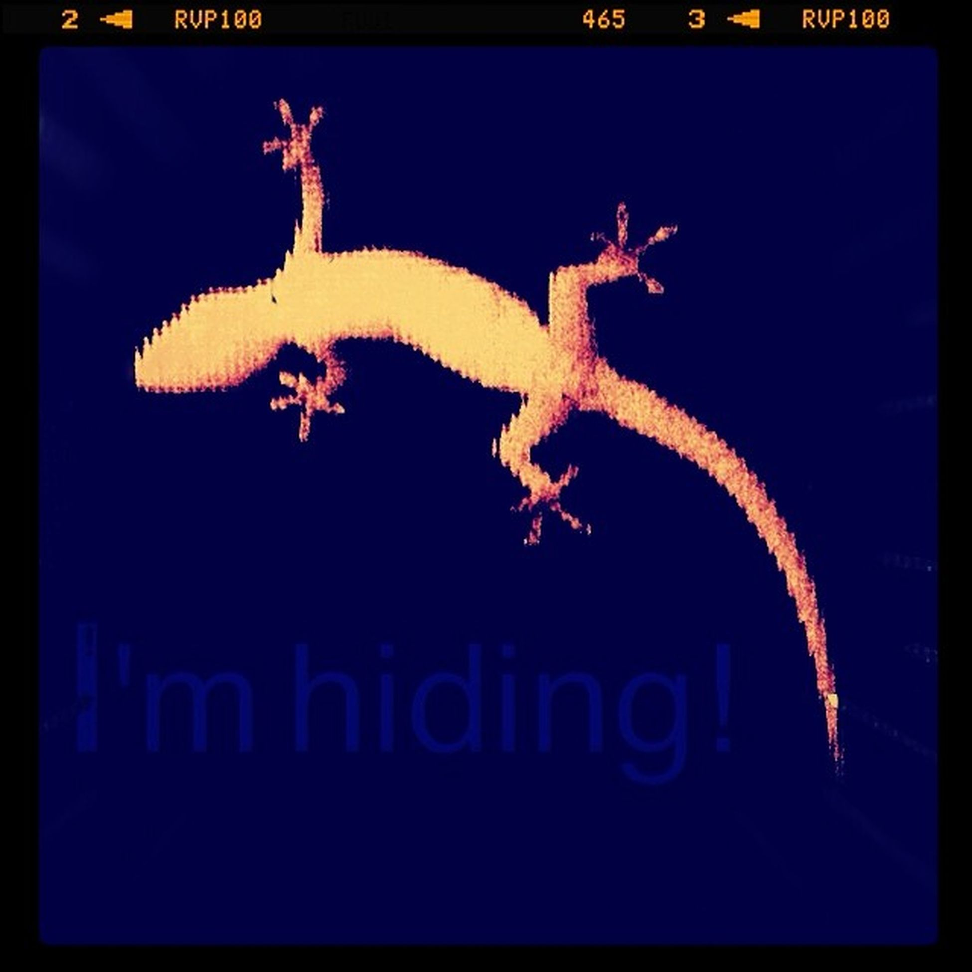 lol little guy thinks you can hide on frosted glass lol... Australian Native Gecko Hidingout lizard cute reptile nighttime wildlife bestbugcatchingintown instareptile looking though a window stickytoes funny