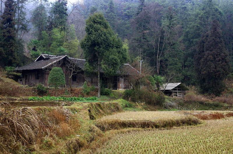 老屋 户外 宁静 No People Day Outdoors Tree Built Structure Field Nature