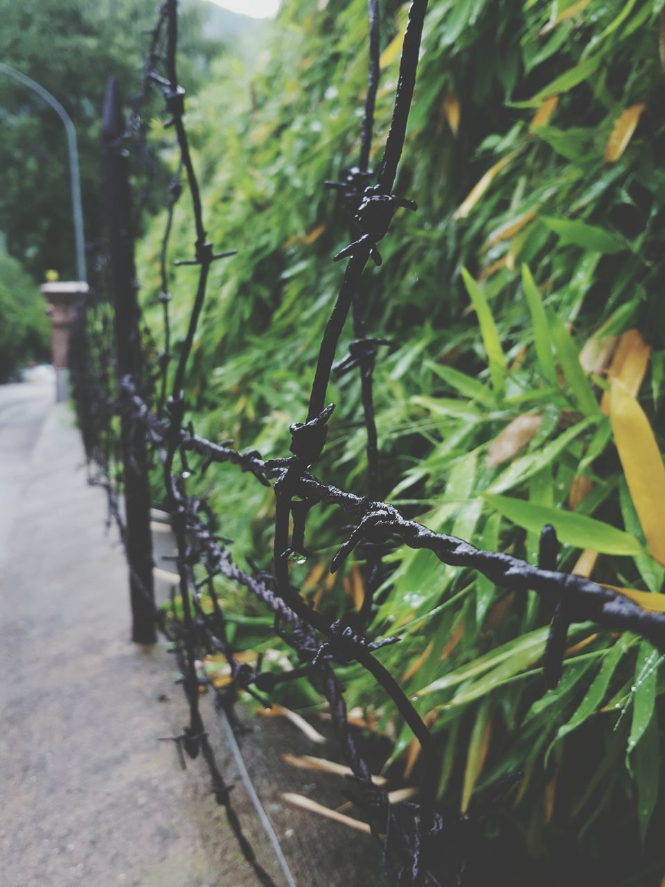 Fence By Plants At Park