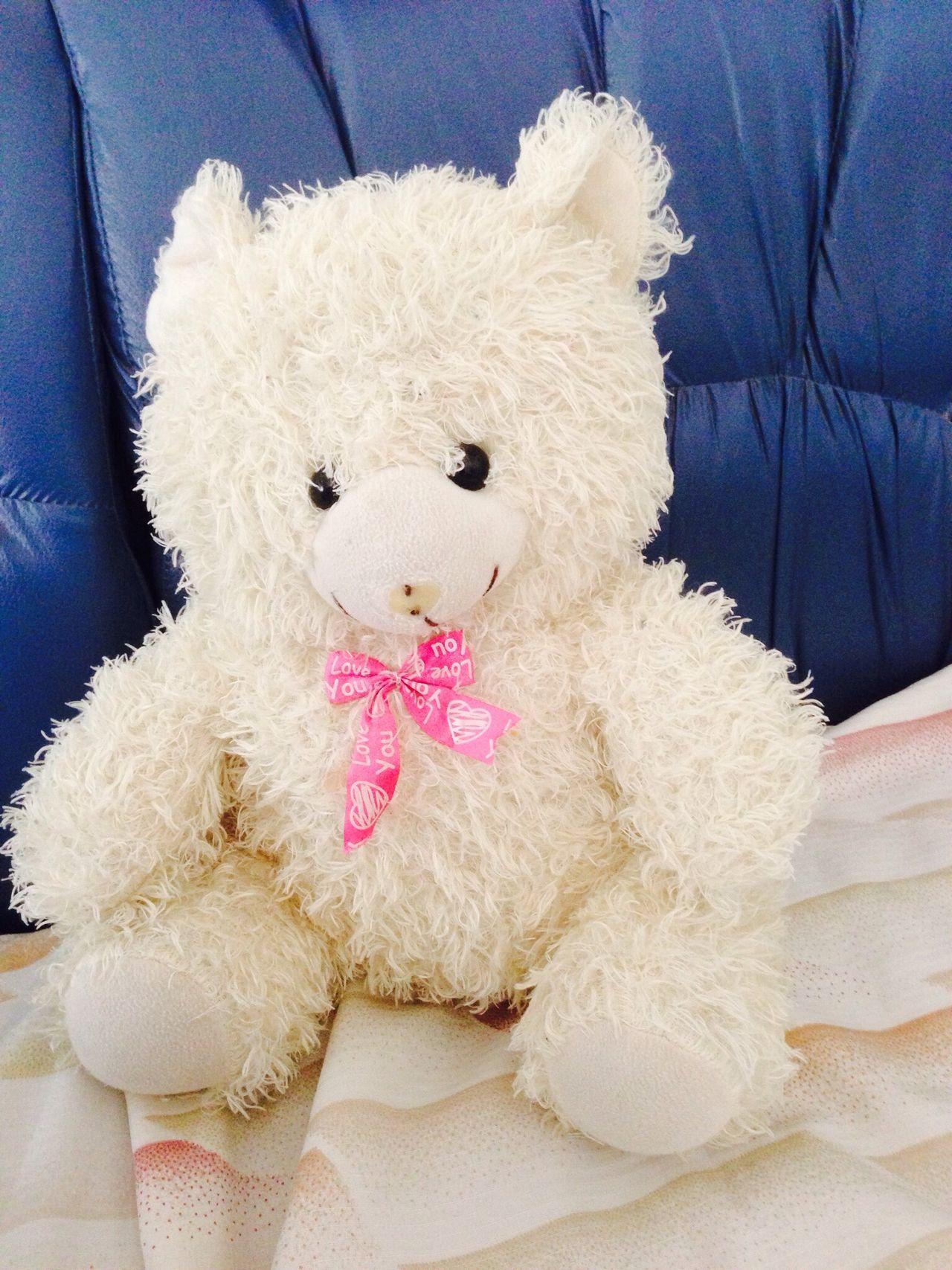 Beautiful stock photos of teddy bear, Bow, Childhood, Close-Up, Cute