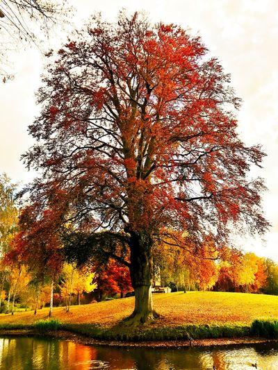 Potsdam IPhone 7 Plus Nature Herbst🍁 Herbstfarben Herbststimmung Tree Beauty In Nature Braun Herbst Park Sanssouci Tree Growth Orange Color Autumn Beauty In Nature Scenics Autumn Still Life