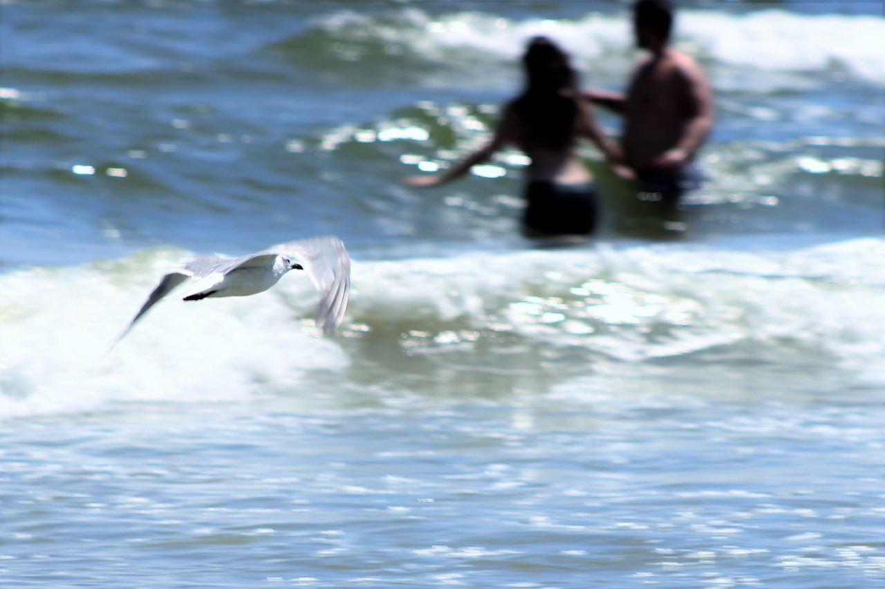 Bird Blurredbackground Flying Focus On Foreground Mid-air Nature Ocean Outdoors Person Sea Seagull Water Waterfront Wave Weekend Activities My Favorite Place