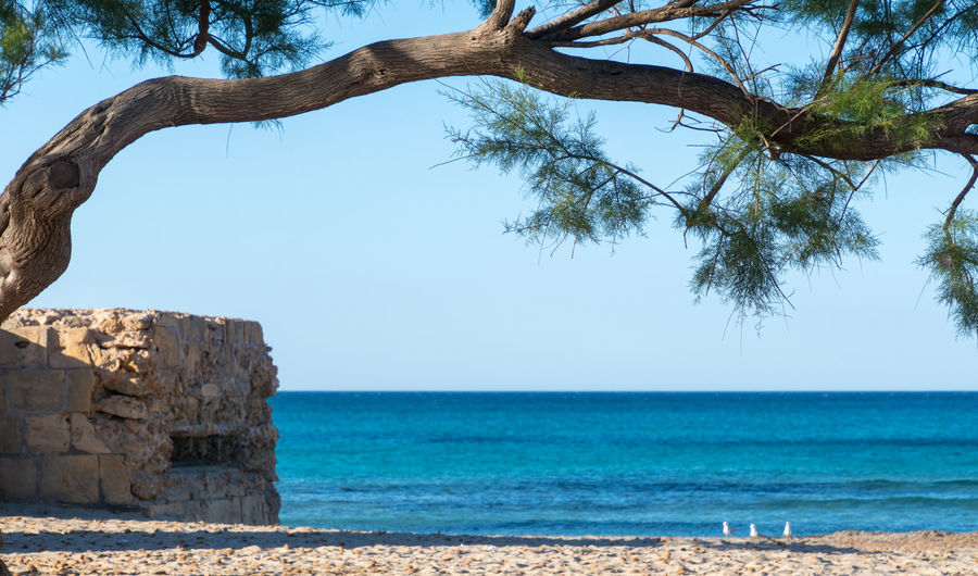 Krull&Krull Images Mallorca Bunker Mallorca Beach Beauty In Nature Blue Branch Building Clear Sky Day Growth Horizon Over Water Nature No People Outdoors Scenics Sea Sky Son Serra De Marina Tranquil Scene Tranquility Tree Tree Trunk Water An Eye For Travel