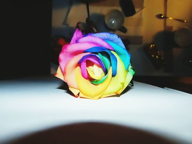 Flower 🌹 Beautiful Nature A Rose Colorful I Love This Colors