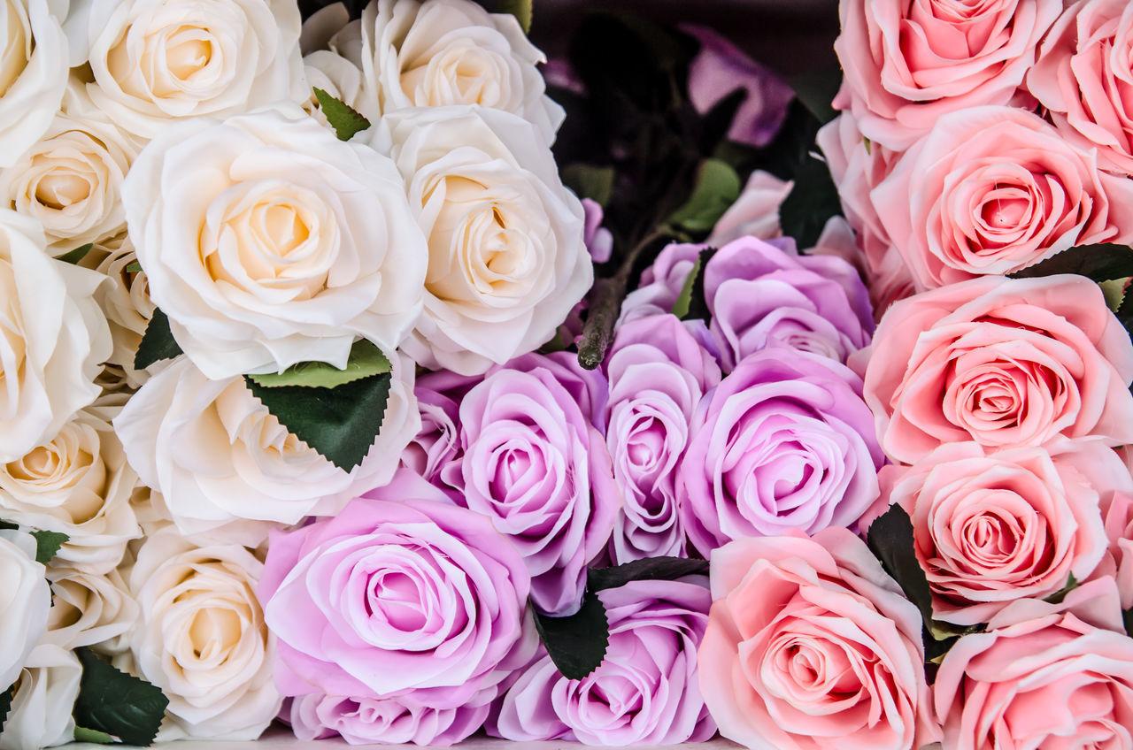 Full Frame Shot Of Roses Blooming Outdoors