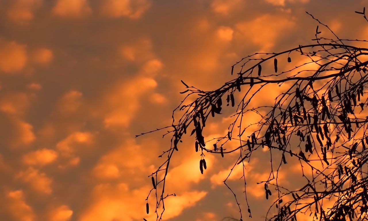sunset, sky, nature, cloud - sky, orange color, beauty in nature, silhouette, dramatic sky, outdoors, tranquil scene, scenics, tranquility, no people, low angle view, day