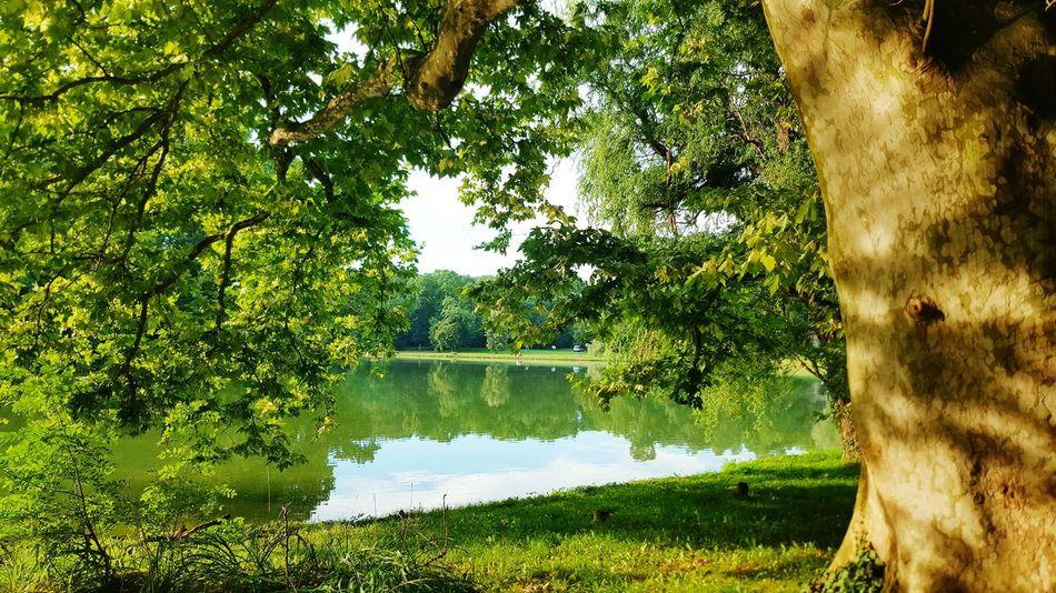 Brunszvik Caste Park, Hungary Old Tree Lake Lake View Park