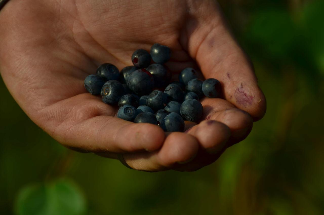 Blaubeere Blaubeeren Blueberries Blueberry Close-up Delicious Freshness Fruit Healthy Eating Heidelbeeren Human Hand Lecker Natural Outdoors Purenature Schweden Tasty Wild
