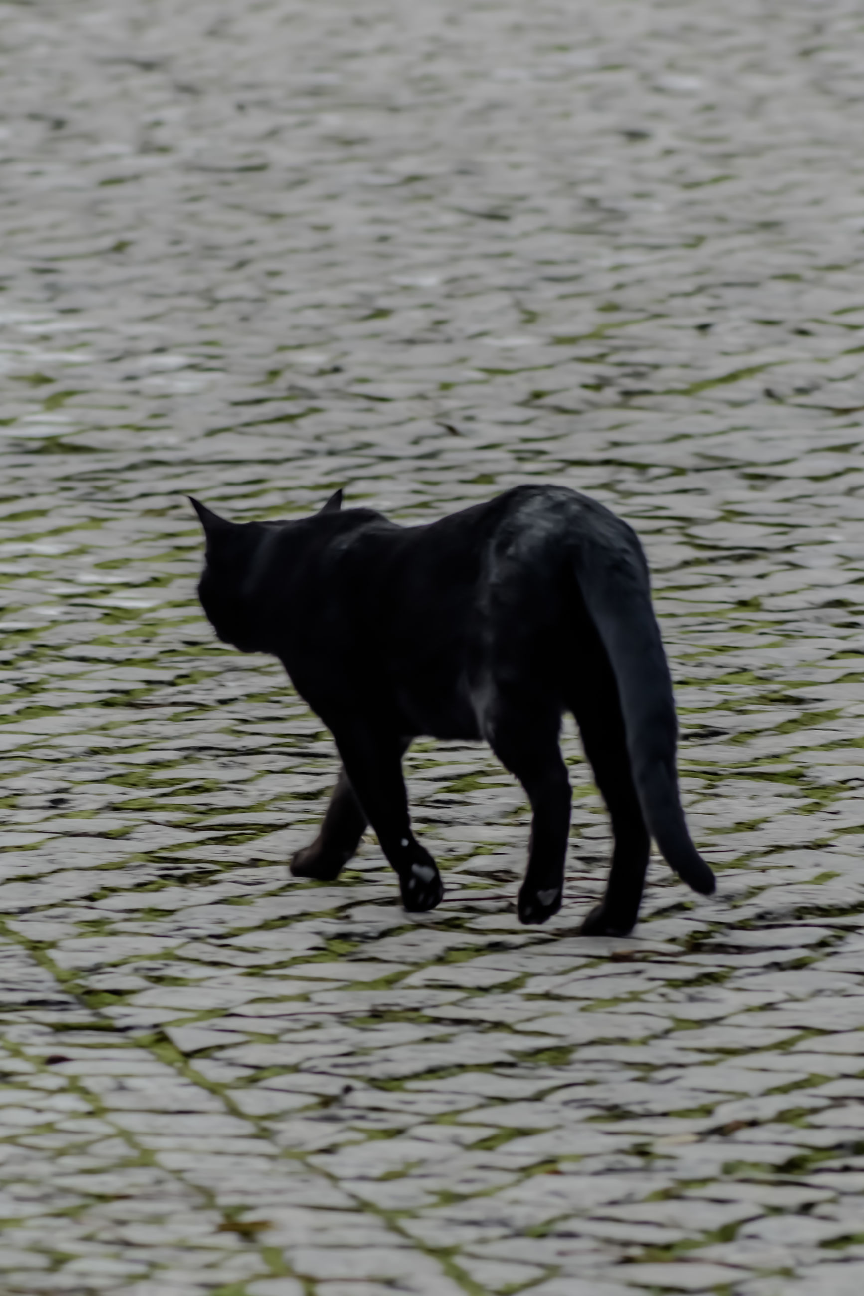 animal themes, one animal, mammal, black color, domestic animals, no people, waterfront, water, nature, outdoors, day, pets