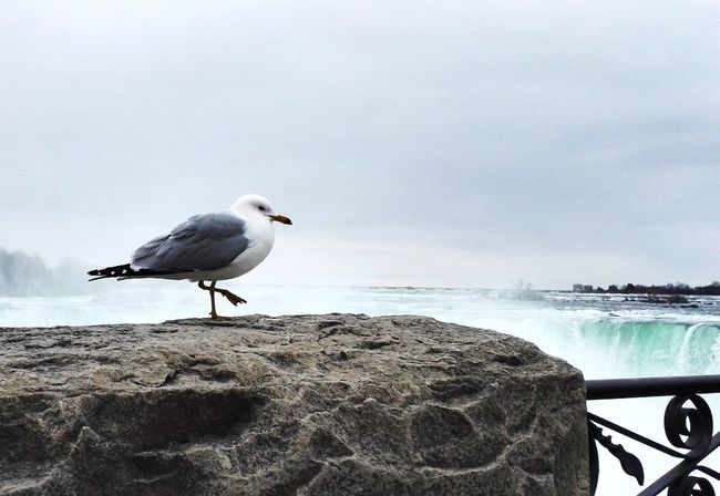 Hanging Out Taking Photos Check This Out Hello World Enjoying Life Tourist Spring Water_collection Water Niagara Falls Seagull