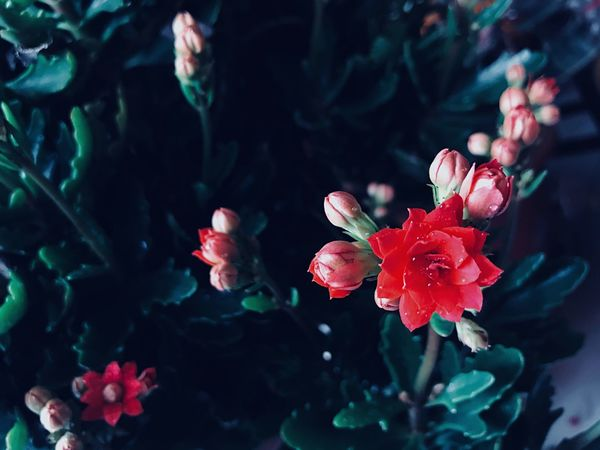 Flower Beauty In Nature Petal Fragility Nature Growth Freshness
