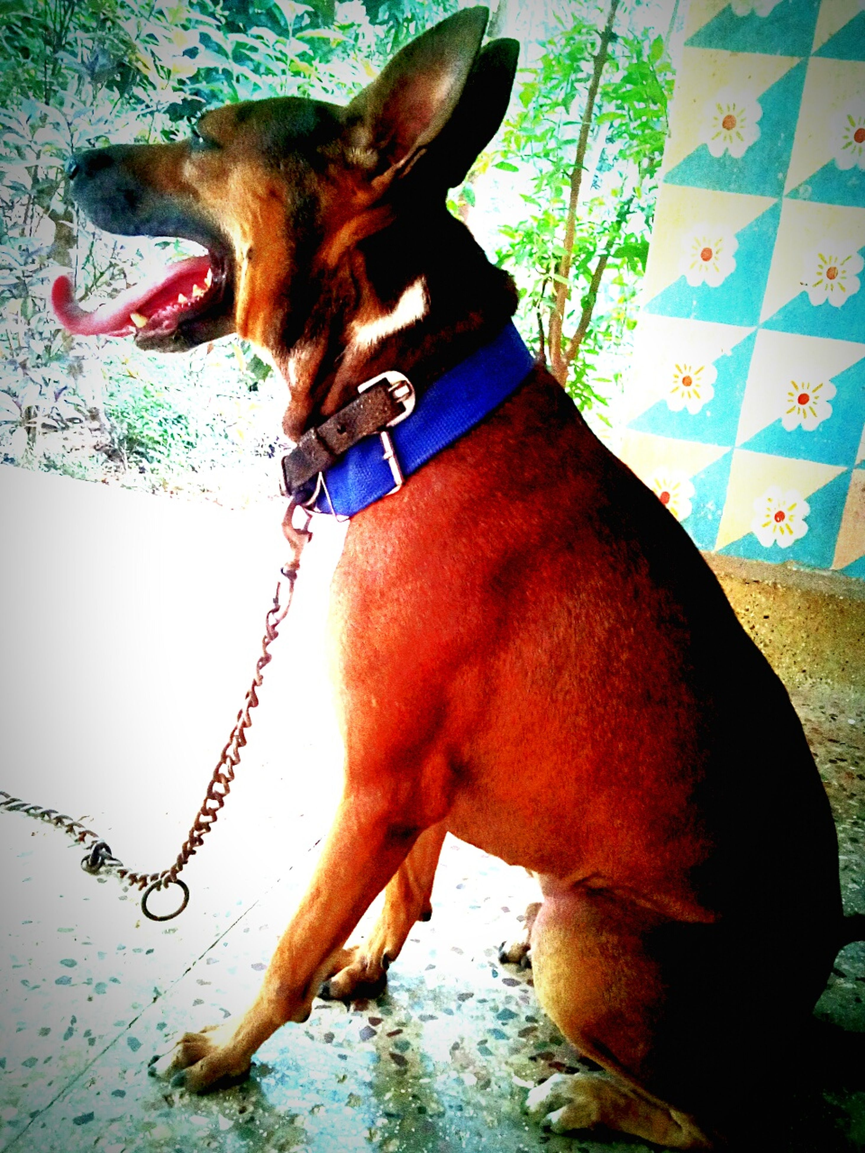 domestic animals, animal themes, mammal, one animal, pets, dog, horse, brown, working animal, standing, animal head, pet collar, one person, livestock, part of, day, animal body part, outdoors, side view, pet leash