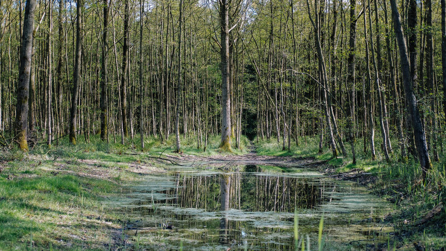 Beauty In Nature Day Forrest Forrest Photography Nature No People Scenics Tranquility Tree Water EyeEmNewHere