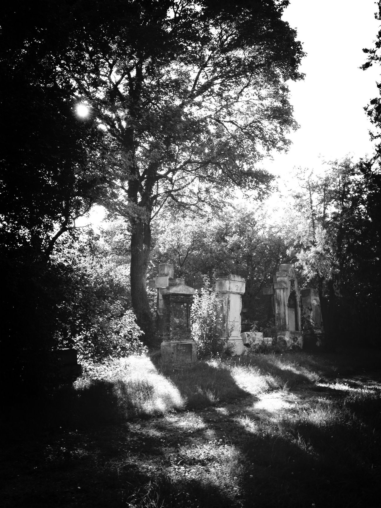 Vienna Park Cemetery Black & White