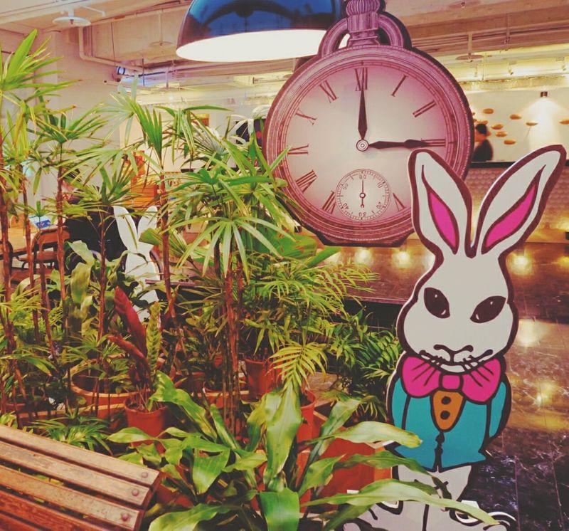 愛麗絲夢遊~~amba的概念。😎😎✨ Checking In Pocket Watch Rabbit Grass Art Amba 意舍 Taipei Ximenging