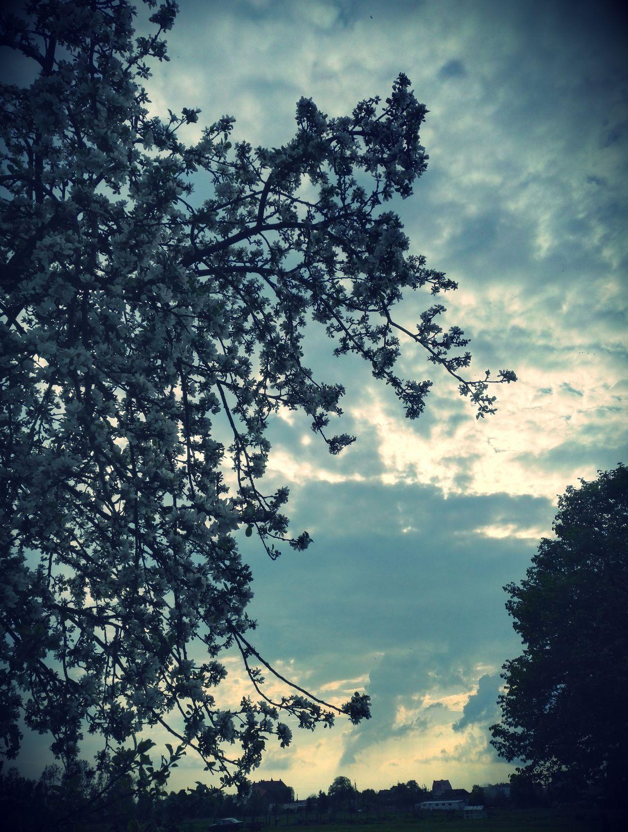 222. Tree Sky Cloud - Sky Low Angle View Forest Growth Scenics Storm Cloud Branch Himmel EyeEm Masterclass EyeEm Best Edits Eyeem Photography EyeEmBestPics EyeEmbestshots EyeEmNewHere Telephone Photography Mobilephotography TreePorn Beauty In Nature Nature Outdoors EyeEm Best Shots No People Landscape