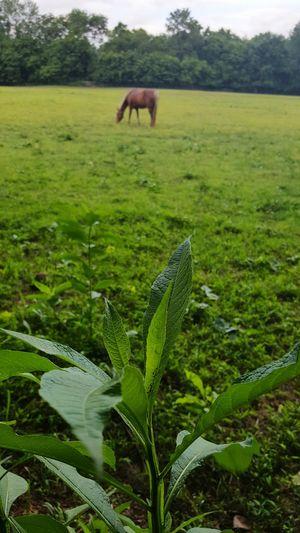 Walking Around Taking Photos Horse <3