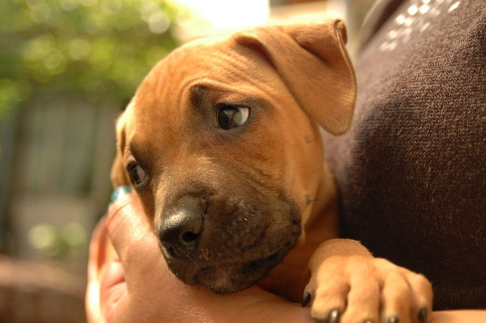 Animal Themes Brown Close-up Day Dog Dog Love Dogs Of EyeEm Domestic Animals Focus On Foreground Held In Hand Held In Hands Held In Your Hands Longing Mammal One Animal Outdoors Pets Puppy Puppy Feeling Puppy Love Puppy❤ Sad Sad Puppy Sadness