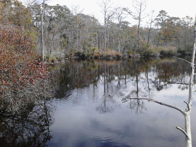 Reflections Nature Shadows Geocaching Coastal Carolina