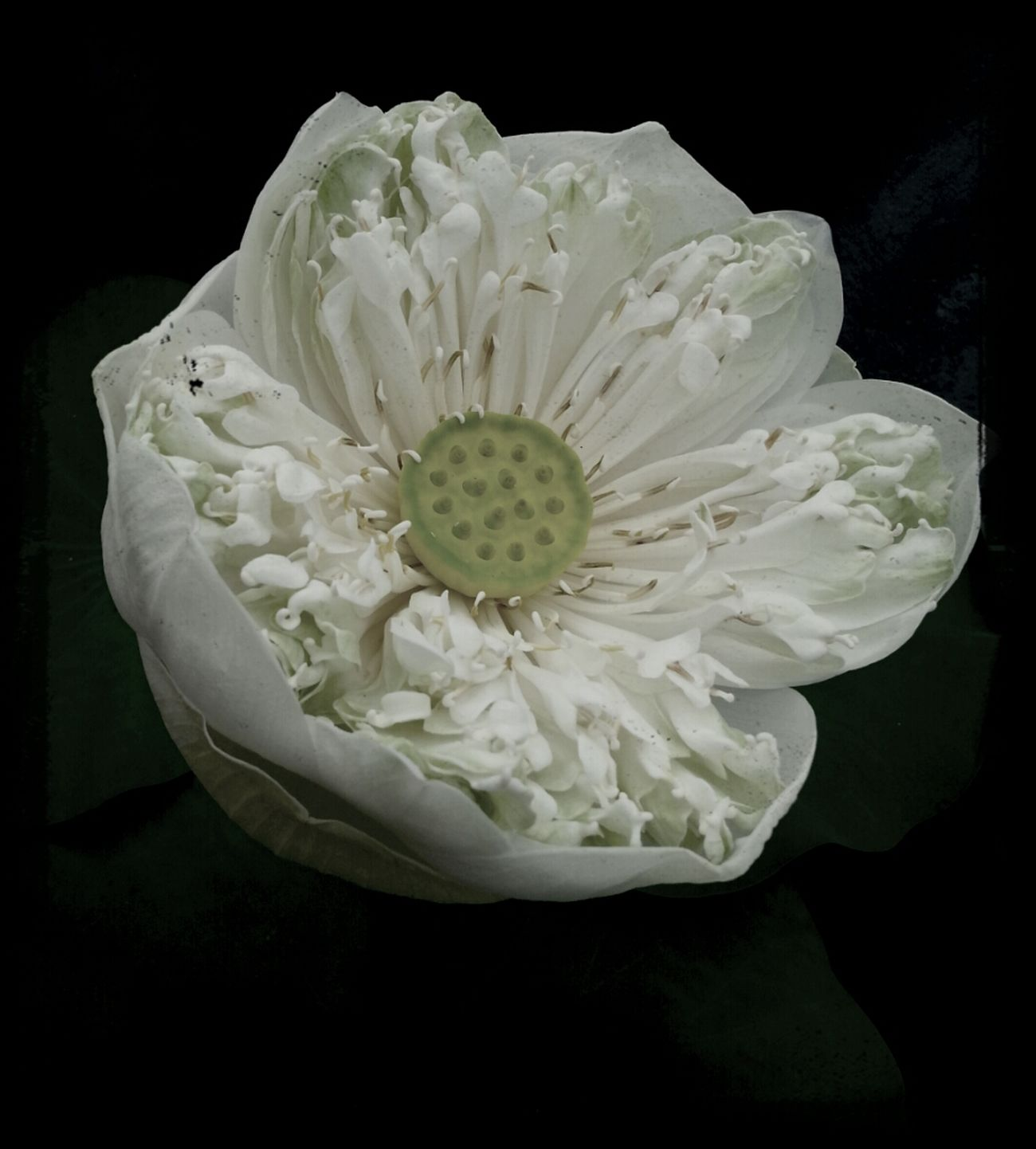 Flower Lotus Bali Hello World