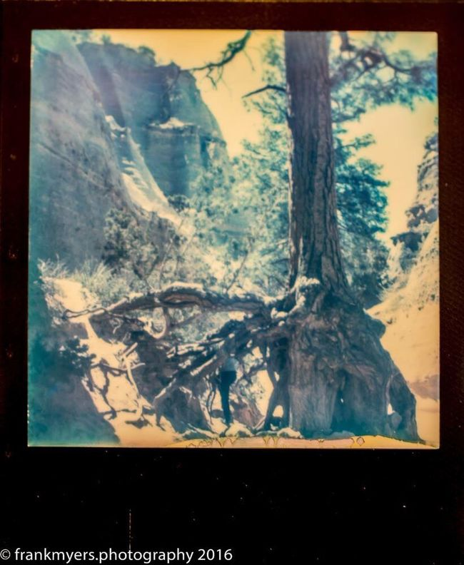 New Mexico Mountain Tree Desert Landscape Impossible Project