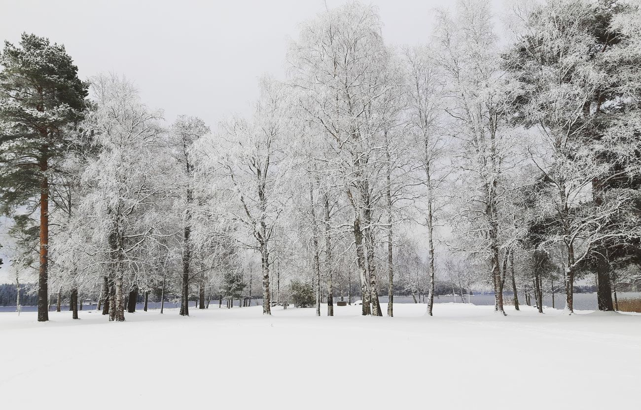 As the snow settels Tree Nature Snow Winter Cold Temperature Beauty In Nature Snowing Tranquility Dalarna Enjoying Life Explore Discover Pursue Life Is Adventure Sweden Winter Winteriscoming Winterishere Bjork