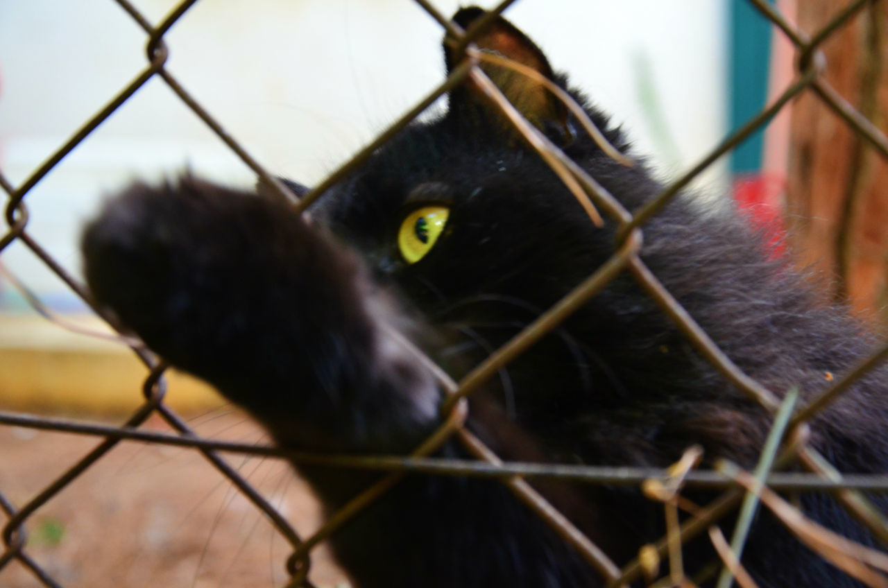 Alertness Animal Themes Barbed Wire Barbed Wire Fence Behindthefence Black Cat Cat Curiosity Domestic Animals Domestic Cat Feline Portrait Protection Safety Security Selective Focus