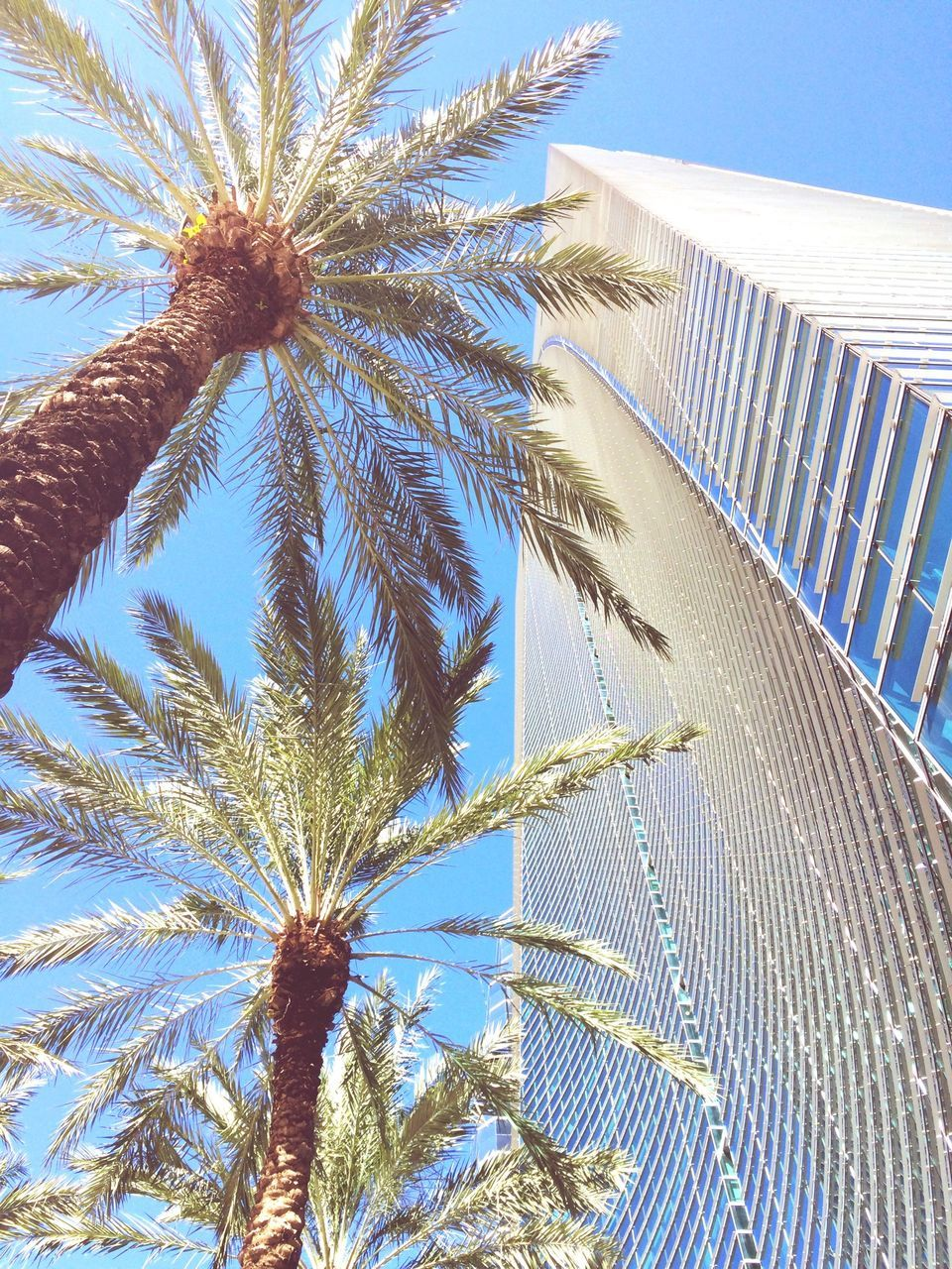 Low Angle View Of Palm Trees By Modern Building Against Sky