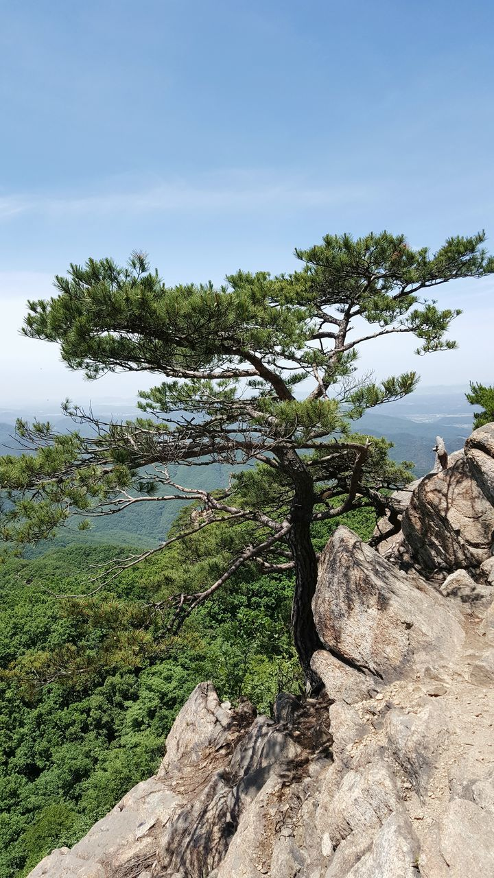 nature, tree, tranquility, tranquil scene, beauty in nature, scenics, landscape, rock - object, no people, outdoors, day, sky, mountain, water, growth