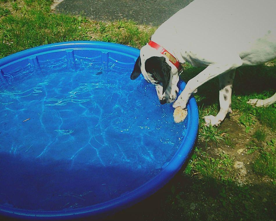 Dog DogLove Water Rock Pitbull HoundDog Mixedbreed Boy Ferrari Play First Eyeem Photo