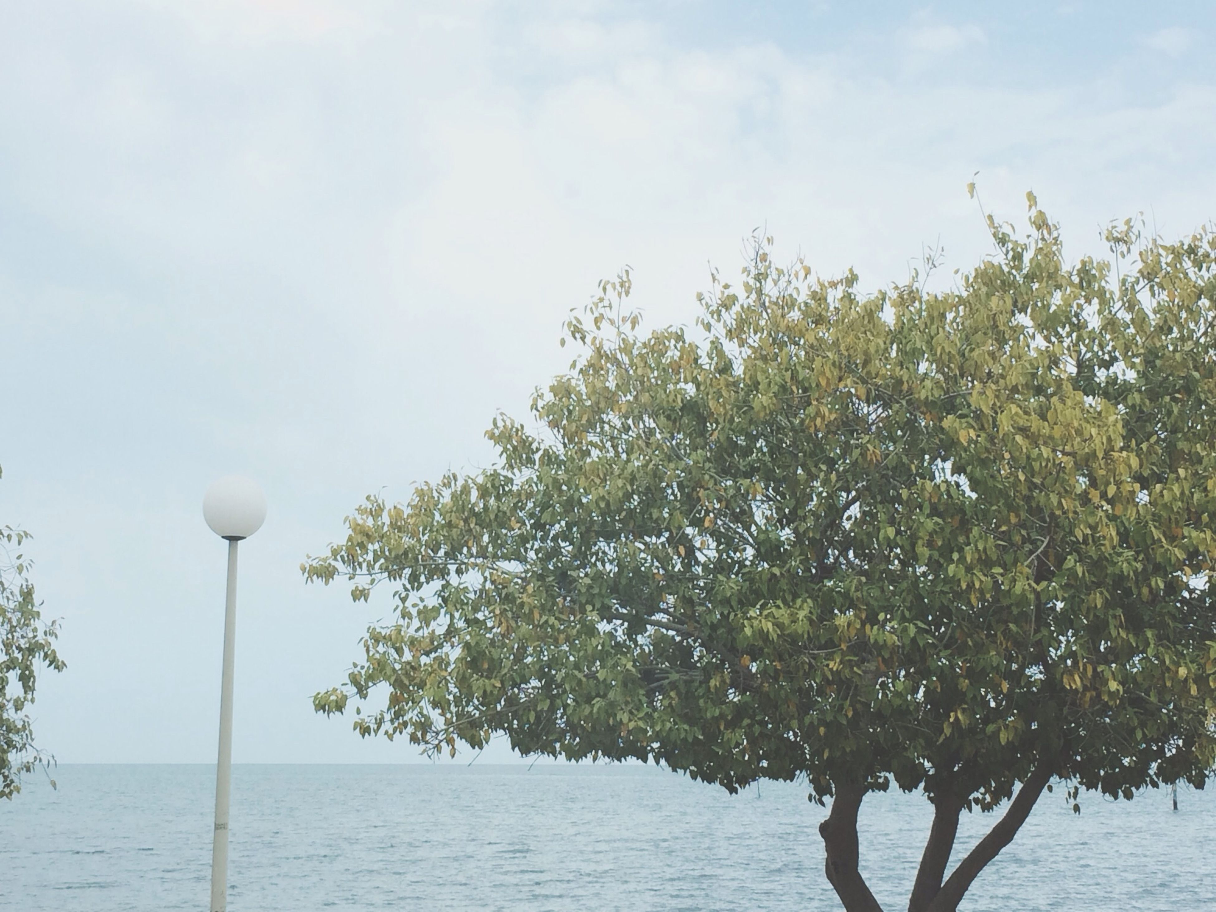 tree, sky, tranquility, nature, street light, beauty in nature, tranquil scene, growth, water, low angle view, scenics, branch, day, cloud - sky, outdoors, cloud, no people, idyllic, lighting equipment, sea