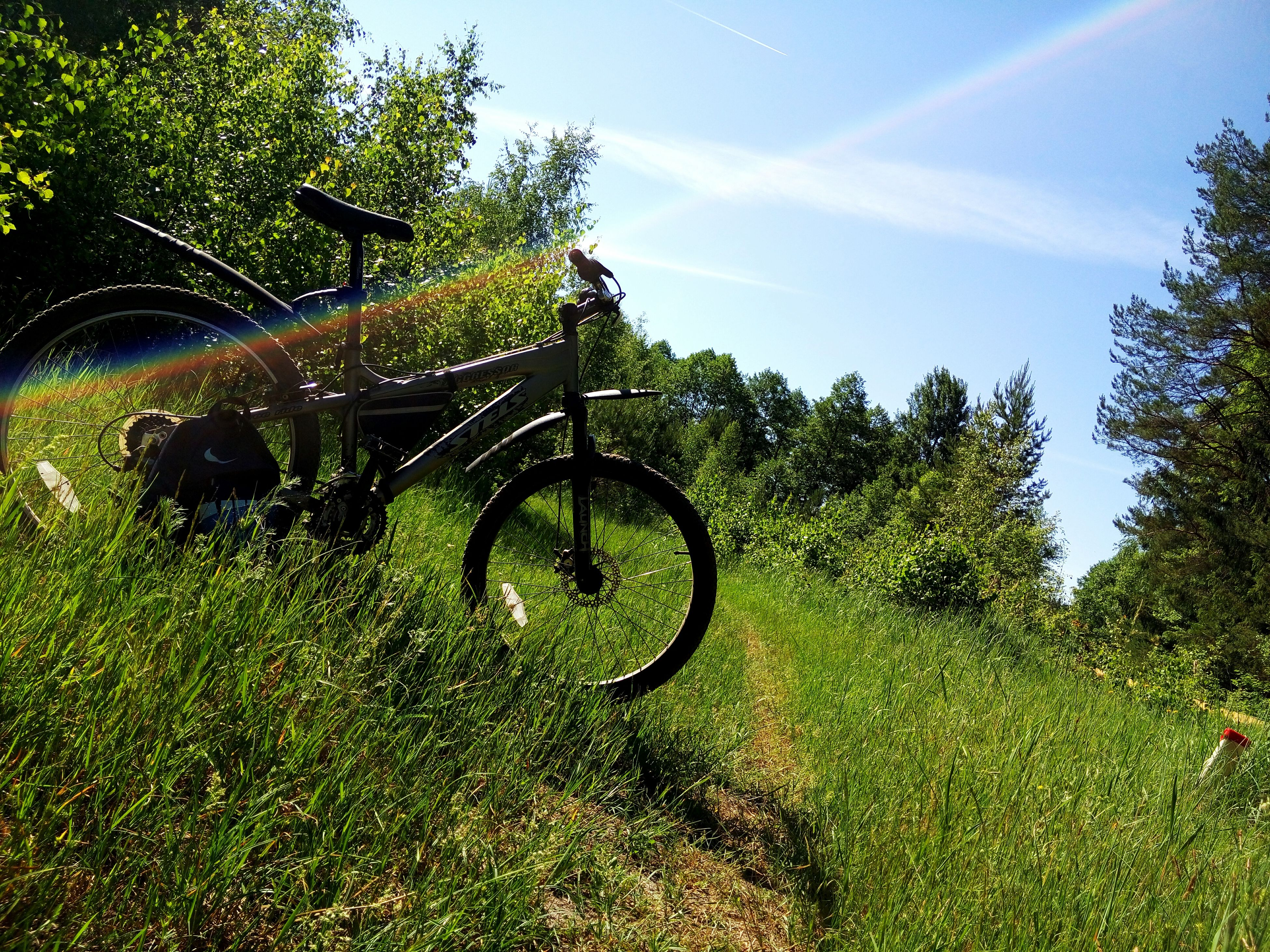 tree, grass, growth, field, green color, plant, sky, grassy, sunlight, nature, tranquility, day, bicycle, outdoors, tranquil scene, no people, landscape, shadow, beauty in nature, rural scene
